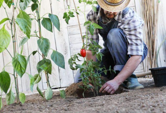 Nasveti za vrtnarjenje